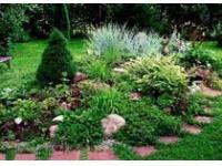 Интересное и популярное решение в ландшафтном дизайне – растение папоротник