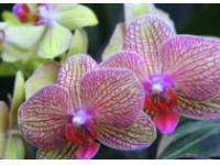В Питере проходит выставка орхидей