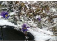 В Кузбассе расцвели цветы