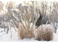 Как подготовить кустарники к зиме