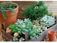 Лечебные растения у себя в квартире
