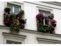 Как правильно выращивать травы на балконе и террасе?