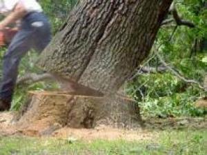 Как безопасно удалить дерево с придомовой территории