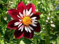 Цветы в вашем саду