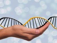О чем расскажет ген