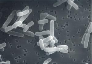Компания 3М представила новую технологию для определения молочнокислых бактерий