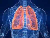 Улучшение выживаемости без прогрессирования больных со злокачественной мезотелиомой плевры на фоне терапии нинтеданибом было представлено на Всемирной конференции по раку легкого